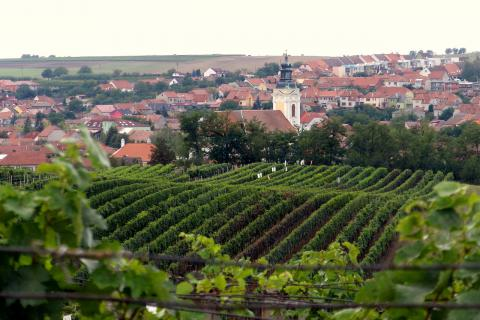 One-day Tour to Moravian Wineries